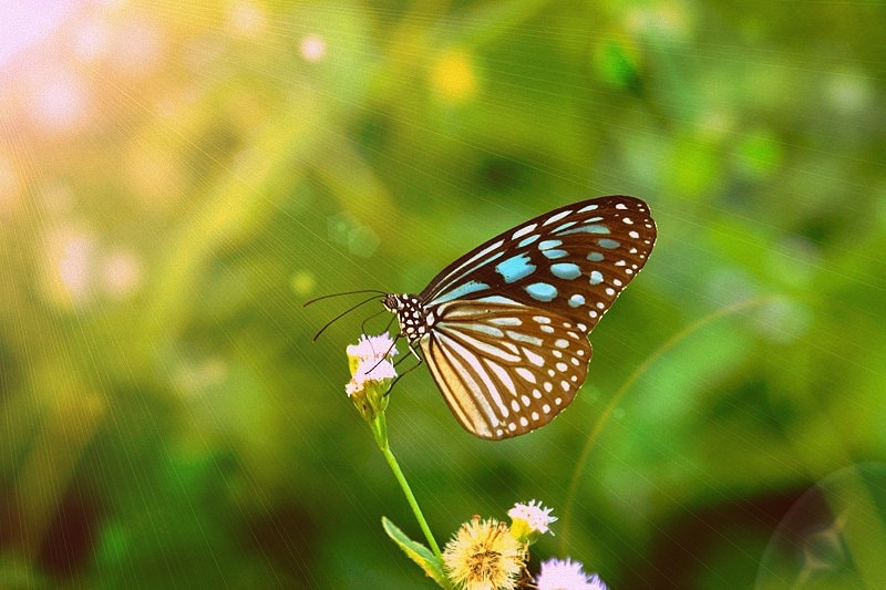 Butterfly real